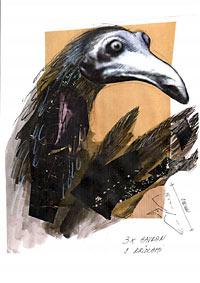 Czarne ptaki Białegostoku